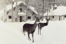 Vintage Two Deer Snow Cabins Golden British Columbia Unposted Post Card H065