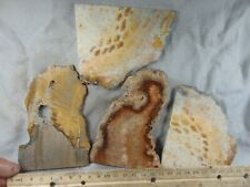4 indonesian coral agate slabs