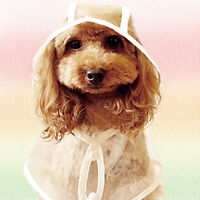 Waterproof Small Dog Raincoat Puppy Pet Hoodie Rain Jacket Rainwear Blue Pink