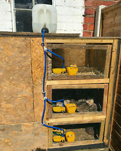 Automatic Drinker Kit for Poultry, Quail, Partridge