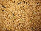 Organic Chicken Feed Poultry Peas Oat Wheat Sunflower Barley Flax  * 20 lbs *