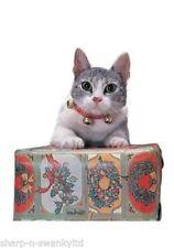 Artículos sin marca color principal rojo para gatos