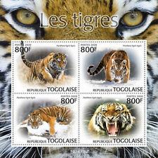 Togo 2020 fauna tigers S202004