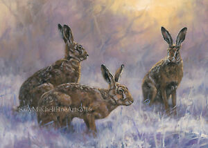 Hares in the Snow, Christmas cards pack of 10 by John Trickett C496X