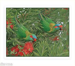© ART - Musk Lorikeets Parrot Bird Original wildlife nature print by Di