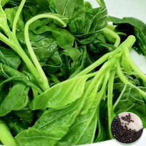 50 Super Green Amaranth Seeds UK Large Leafy Vegetables & Greens for Dishes