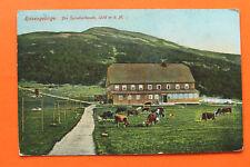 Tschechien CZ AK Riesengebirge Spindlerbaude Špindlerova bouda 1910-25 Haus Kuh