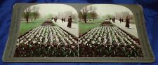 BG154 Vtg Keystone Stereoview Photo Gardens Boston MA