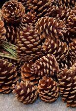 1 KG Pigne Di Natale Abete NATURALE 8 cm artigianale CORONA decorazioni TAVOLA ALBERO Garland