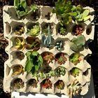 Succulent cuttings 15 varieties 30 cuttings mini garden starter
