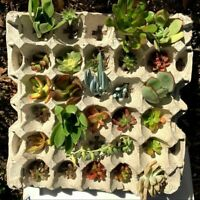 Succulent cuttings 15 varieties 30 cuttings mini garden starter
