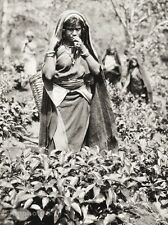 1934 Vintage 11x14 SRI LANKA Ceylon Island Folk Tamil Girl Photo Art ~ HURLIMANN