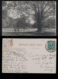 78-ONTARIO -Toronto Allan Gardens  (1904)(Private Mailing Card (c. 1898-1907)