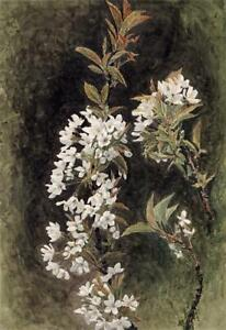 WILD CHERRY BLOSSOM Antique Watercolour Painting - 19TH CENTURY