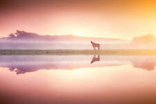 STUNNING HORSE REFLECTION SUNSET CANVAS #239 LANDSCAPE WALL HANGING PICTURE ART