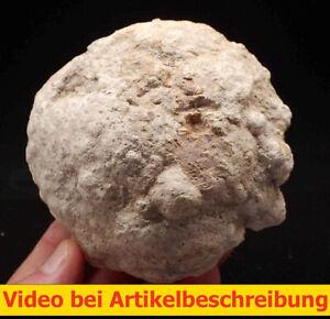 8040 Geode ungeöffnet  ca 11*10*9 cm Fundort unbekannt