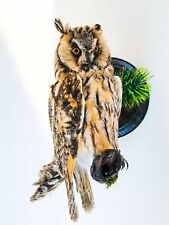 Vintage Real Genuine Stuffed Bird Owl Taxidermy Wall Mount 12.5 in""