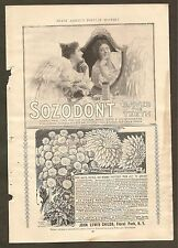 VINTAGE ADS FOR SOZODONT TEETH CLEANER, JOHN LEWIS CHILDS CHRYSANTHEMUMS, ETC.