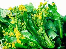 NEW! 2000-seeds Choy-Sum-Choi-Sum-Yu-Choy-Chinese-Flowering-Cabbage Thailand