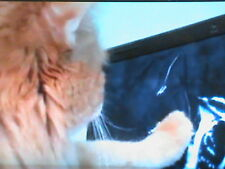 Yet Another Audio Visual Catnip DVD