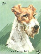CARD BON POINT Fox-terrier à poil dur Wire Fox Terrier  CHIEN DOG 60s