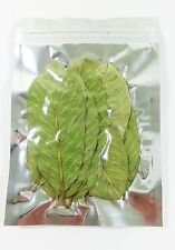 Guava Dried Leaves (20) PC 100% Organic Crystal Red Shrimp Food NO Pesticides