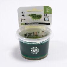 Java Moss Taxiphyllum barbieri - Dennerle Plant It InVitro Shrimp Safe