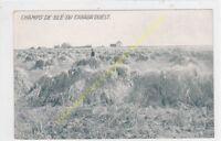 POSTCARD QUEBEC CANADA Champs de blé du Canada ouest Edit WIALLARD