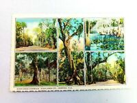 Vintage Postcard Highland Hammock Highlands Co. Sebring Florida
