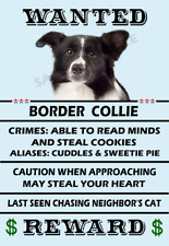 Border Collie Dog Wanted Poster Flex Fridge Magnet 2.75 X 4.0 See Video