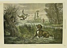 Hunting Dog, Field Spaniel, Retriever, Gun Dog Vintage French 1874 Antique Print