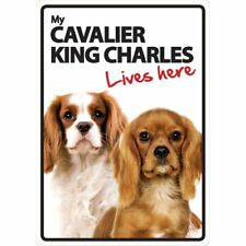 Cavalier King Charles Spaniel Lives Here A5 Plastic Sign