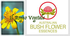 FIORI AUSTRALIANI Tall Yellow Top ISOLAMENTO SOLITUDINE/APPARTENENZA INTERAZIONE