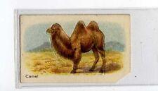 (Jb1945-100)  HUSTLER,ANIMALS 1ST SERIES,CAMEL,1925#6