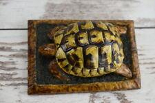 Dalmatian Turtle Shell Taxidermy Not Endangered Balkans HERMANN TORTOISE