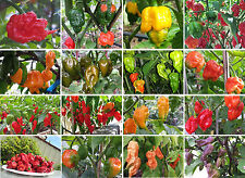 World's Hottest Chilli Ultimate Collection - Prepare Yourself for an Atomic Burn