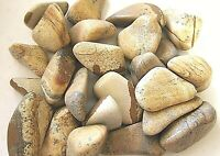 Six Picture Jasper Tumbled Stones 35-45mm Reiki Healing Crystals Heal Past Lives