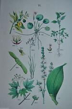 Originaldrucke (1800-1899) mit Blumen- & Pflanzen-Motiv und Lithographie-Technik