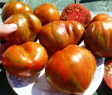 Tomato BERKLEY TIE DYE HEART 20 Seeds Heirloom Vegetable Organic Oxheart Rare