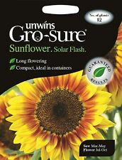 Unwins Pictorial Packet - Flower - Sunflower Solar Flash F1 - 12 Seeds