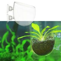 Mini Aquarium Red Shrimp Fish Tank Crystal Holder Aquatic Plant Glass Cup Pot