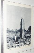 PHOTO ECOLE 1953 COLONIES AFRIQUE NIGERIA DU NORD TERMITIERE