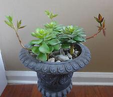 3 Burgeon Snow Lotus Plastic Artificial Grass Succulents Plants Landscape