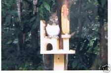 Squirrel Feeder Single Chair with Corn