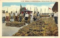 Tarpon Springs Florida 1930-40s Postcard Sponges at Sponge Exchange