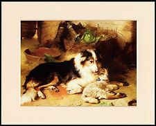 BORDER COLLIE SHEEPDOG & LAMB LOVELY LITTLE DOG PRINT READY MOUNTED