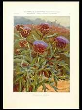 ARTICHAUDS, BARTSCH -1904- PHOTOLITHOGRAPHIE, ART NOUVEAU