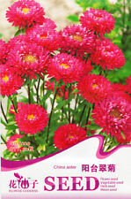 1 Pack 50 China Aster Seeds Callistephus Chinensis Asteraceae Flowers A229