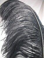 Black Ostrich Feather Plume Premium 18-24 Inch per Each