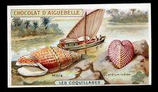 chromo AIGUEBELLE-les coquillages-MITRE,CARDIUM INDIEN